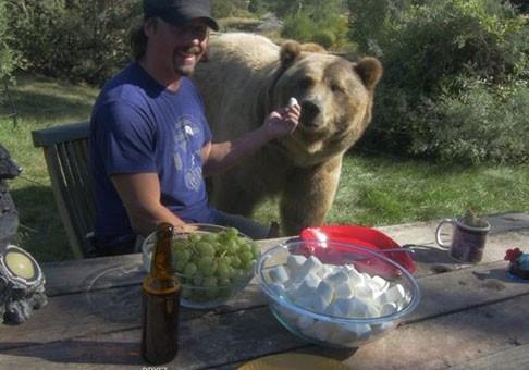 تجربه واقعیت مجازی: نوشیدنی با یک خرس گریزلی