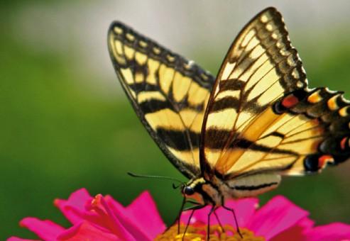 راز پروانه ها برای تحول در بهره وری از انرژی خورشیدی