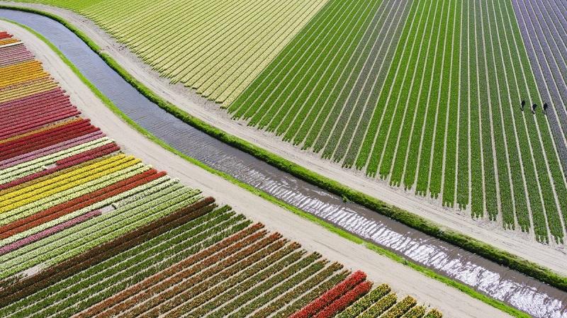 """کاربر درونستاگرام با نام آندره، این تصویر را که بین Sassenheim و Voorhout در کشور هلند واقع شده، ثبت کرده است. در این تصویر، مزارع گل لاله رنگارنگ را می بینید. در قسمت راست تصویر، مردانی حضور دارند که لاله های آلوده به ویروس را پاکسازی می کنند. """"مزرعه ی لاله"""" سومین عکس برنده در دسته ی """"مکان ها"""" بود."""