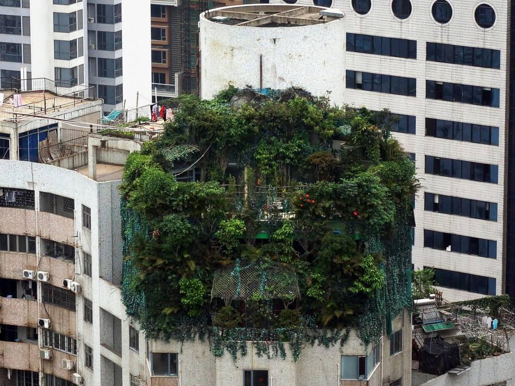 این خانه ی عجیب و غریب که با گیاهان انبوه پوشیده شده، در بالاترین طبقه ی یک ساختمان 19 طبقه در شهر گوانگژو در چین قرار گرفته است. این خانه در دهه ی 90 ساخته شده و هنوز مشخص نیست که صاحب این خانه چه کسی بوده است.