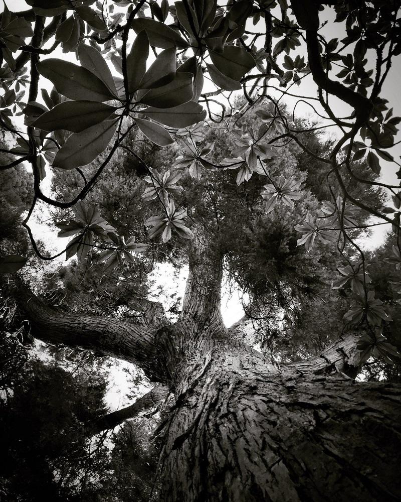 مقام دوم؛ درختان