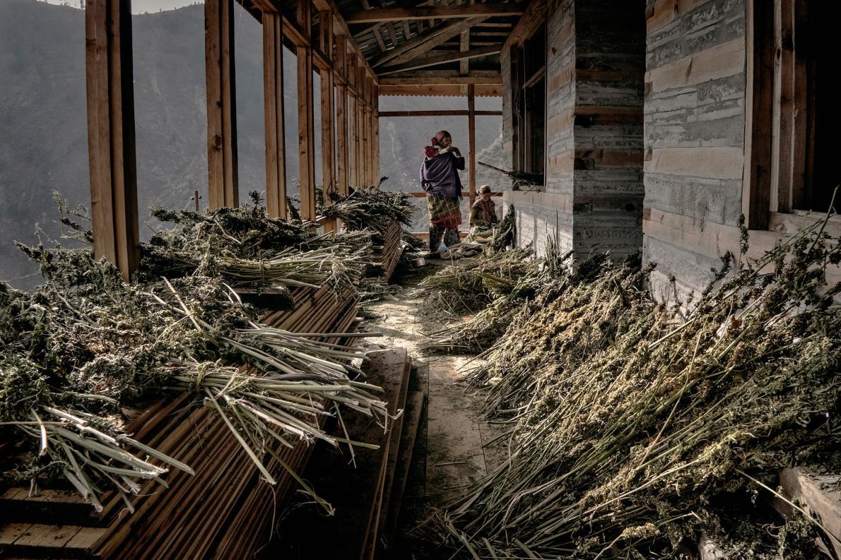 علفهای انباشته در خانۀ یکی از روستاییان
