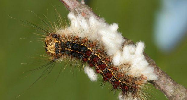 زنبوری که کرم پروانه را شستشوی مغزی داد: انتشار کتاب جدید مت سیمون