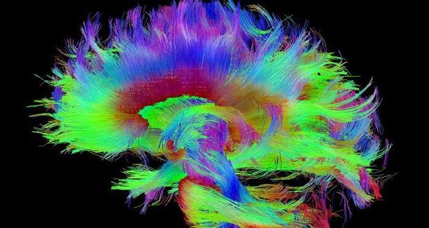 محققان به کشف منشأ فیزیکی ماهیت ذهن نزدیک تر شدند