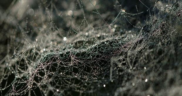 ساخت تار عنکبوت های آنتی بیوتیک با قابلیت ترمیم زخم