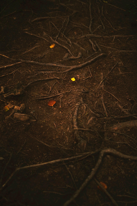 عکس پس زمینه طبیعت گوشی لمسی سامسونگ