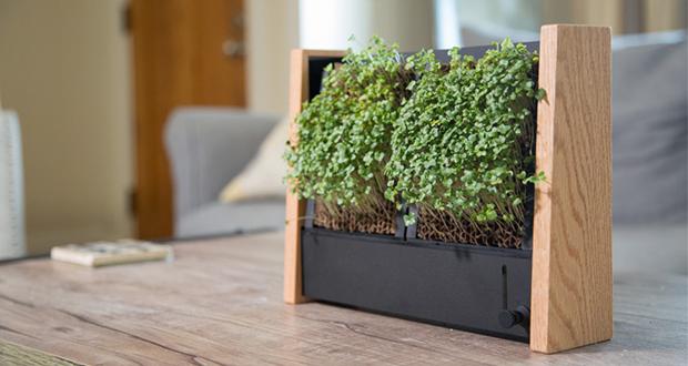 باغچه های عمودی که سبزیجات را سریع و آسان پرورش میدهند