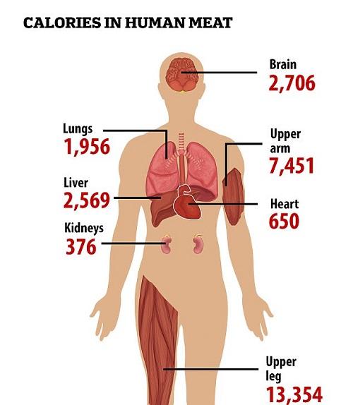 جدول ارزش غذایی انسان