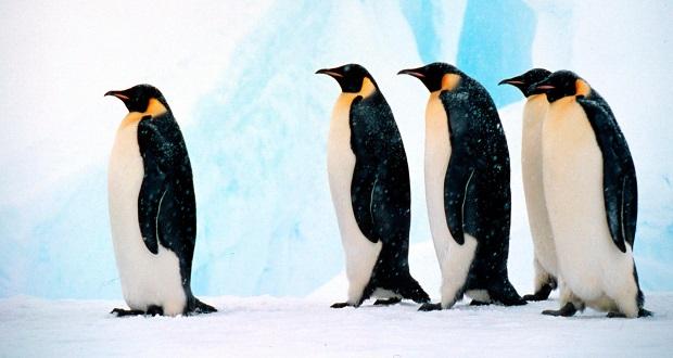 پنج داستان عجیب و باورنکردنی از زندگی پنگوئن ها به مناسبت روز جهانی پنگوئن
