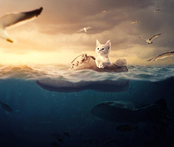 cat-final (2)