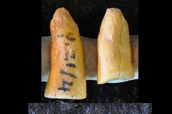 انسان های دوران پارینه سنگی درمان های دندانپزشکی را هزاران سال قبل از اینکه ما به صورت سیستماتیک مواد غذایی مانند غلات و عسل را تولید کنیم، توسعه داده بودند