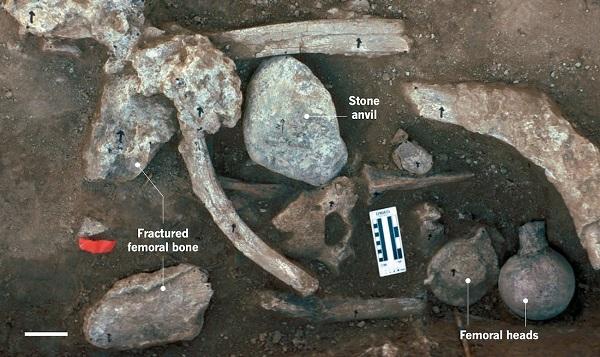 محققان این استخوان ها و دندان های یک ماستودون را در سایت باستان شناسی در سن دیگو، کالیفرنیا یافته اند.