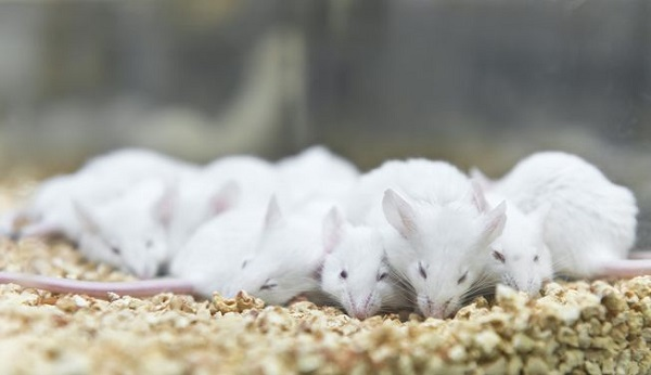 حیوانات آزمایشگاهی معمولا در محیطی سرد، اتاقک هایی بدون پنجره و در فضایی محدود با نور مصنوعی و سر و صدای انسان نگهداری می شوند. این شرایط غیر طبیعی می تواند منجر به بروز استرس و رفتارهای غیرعادی در حیوانات آزمایشگاهی شود، چیزی که می تواند اثر قابل توجهی بر روی نتایج آزمایش در بر داشته باشد