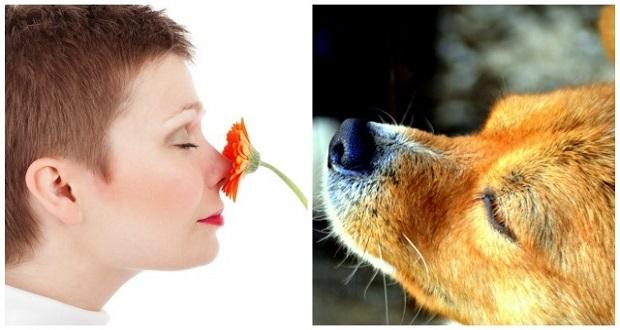 دانشمندان می گویند، حس بویایی انسان دست کمی از سگ ندارد!