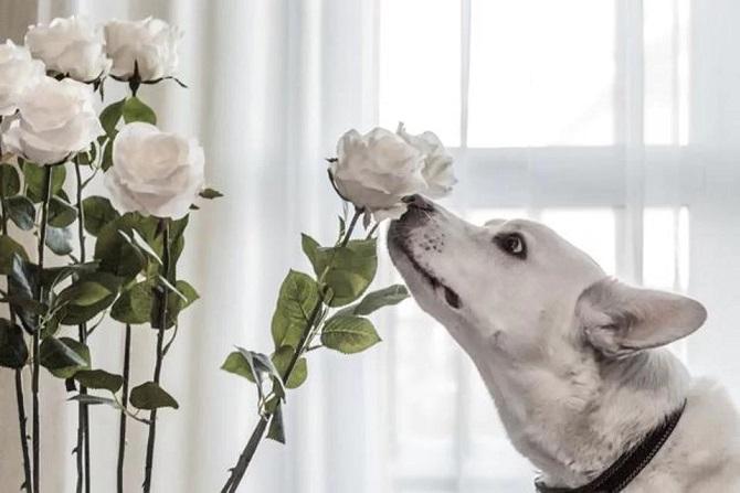 در برخی موارد خاص، همانند عطرها یا پیگیری بوهای خاص ما می توانیم از حیوانات بهتر باشیم، اما به سطح سگ ها نمی رسیم!
