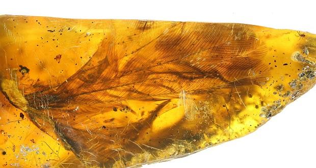 کشف فسیل 100 میلیون ساله یک پرنده درون یک کهربا