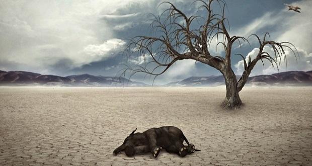 هشدار دانشمندان: بزرگترین انقراض از زمان دایناسورها در راه است