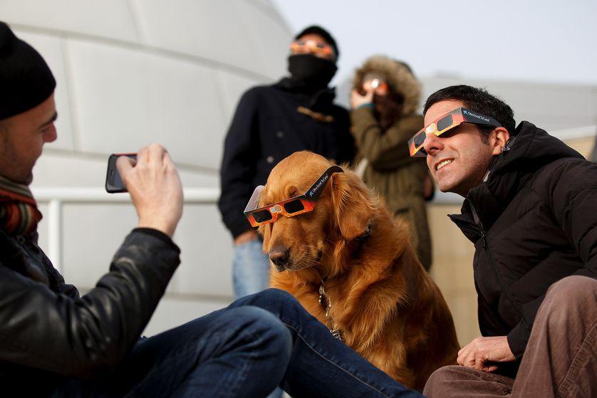انسانها قطعا باید از محافظهای چشم برای تماشای خورشیدی گرفتگی استفاده کنند، اما نظرات متفاوتی در مورد حیوانات وجود دارد. گربهها معمولا خورشیدی گرفتگی را نادیده میگیرند، اما ازآنجاییکه سگها از نگاه انسان پیروی میکنند، ممکن است که افرادی که در معرض خورشیدگرفتگی قرار میگیرند، سگها را هم تحریک کنند. و درنتیجه بسیاری از مردم، به سگهای خود عینکهای مخصوص خورشیدگرفتگی میپوشانند