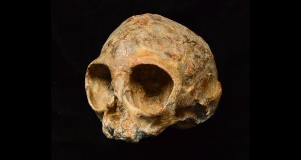 کشف جمجمه ۱۳ میلیون ساله یک بچه میمون در کنیا