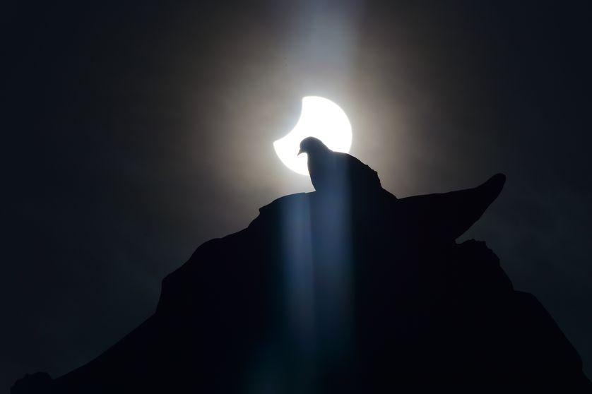 بسیاری از حیوانات وحشی در هنگام خورشیدی گرفتگی کامل، همچون نیمهشب رفتار میکنند. پرندگان در هنگام خورشیدگرفتگی، بهگونهای رفتار میکنند که همچون اینکه ناپدید شدن خورشید به معنای عصر است و بازگشت خورشید به معنای صبح است
