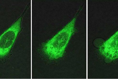 نانوماشینها برای نبرد با سلولهای سرطانی آماده میشوند