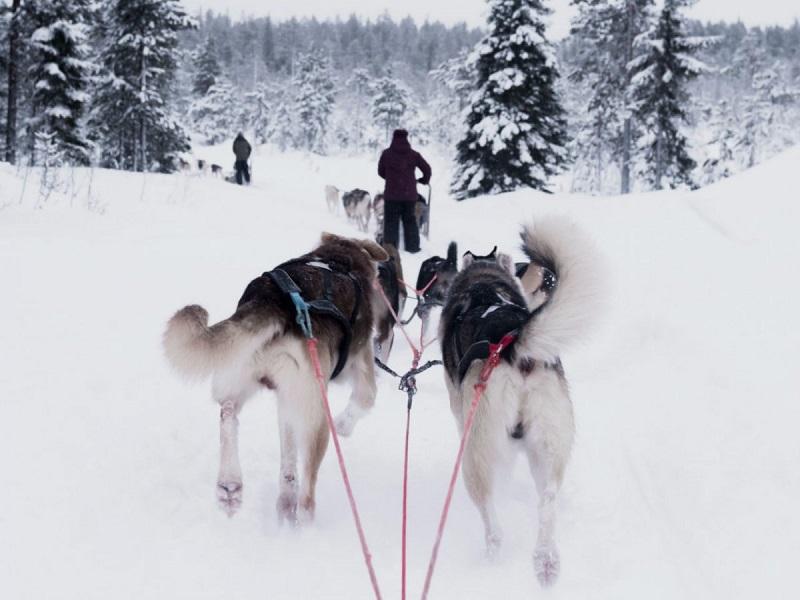 3. فنلاند – 99.1