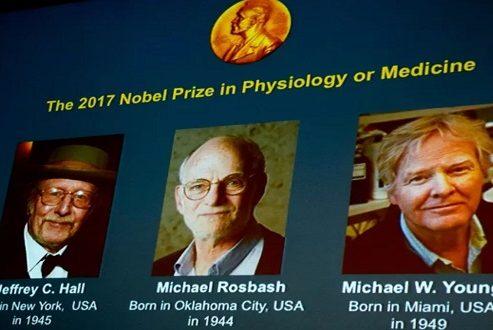 جایزه نوبل پزشکی سال ۲۰۱۷ برای تحقیق در مورد ریتمهای شبانهروزی بدن به سه آمریکایی رسید