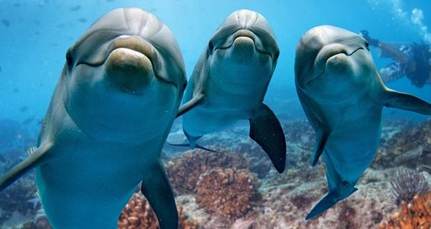زندگی دلفین ها (مستند)