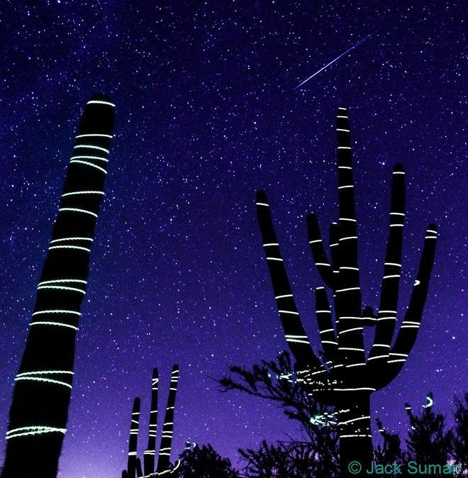 """جک سومان (Jack Suman) عکاس آسمان شب، این تصویر مجذوبکننده را در پارک ملی Saguaro در ایالت آریزونا به ثبت رسانده است. طبقه گفته خودش او این گیاهان را بوسیله اشارهگر های لیزری """"نقاشی"""" کرده است."""