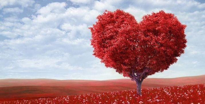 13. عاشق زندگی باشید!