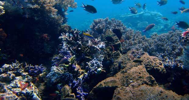 اکتشاف عمیق دریایی برای ساخت گوشیهای هوشمند، جان هزاران گونه نادر آبزی را تهدید میکند!