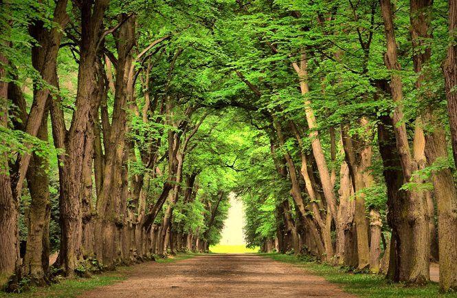 1. همانطور که پیشتر گفتیم، سعی کنید در طول سفر از مسیر، جاده و زیباییهای آن لذت ببرید. تمامی عناصر طبیعت به نوبه خود زیبا هستند، درخت و جنگل، آب و دریا، خاک و کویر، تمامی اینها زیبا و دلربا هستند. بنابراین پیش از آنکه خسته شده و خواب به چشمانتان بیاید، در جای مناسبی توقف کرده و استراحت کنید.