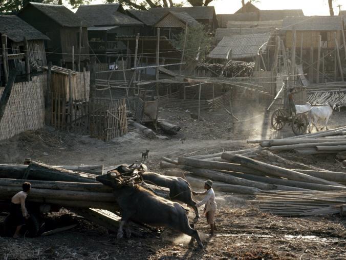 جنگل زدایی در میانمار