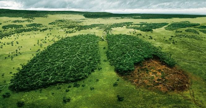 جنگل زدایی چیست ؛ حقایق، علل و اثرات جنگل زدایی