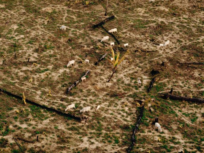 جنگل زدایی در آمازون برزیل