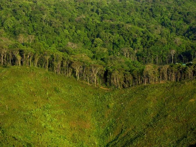 جنگل زدایی در پاناما