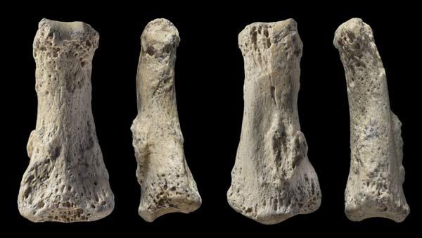 بند انگشت میانی فسیلی هومو ساپین که از زاویههای مختلف از آن عکس گرفته شده است، این فسیل در ال وستا، عربستان سعودی کشف شده است و حدود ۹۰ هزار سال قدمت گذاری شده است