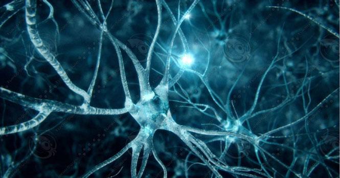 توسعهی مغز مصنوعی ؛ تشخیص روش های اتصال نورون ها