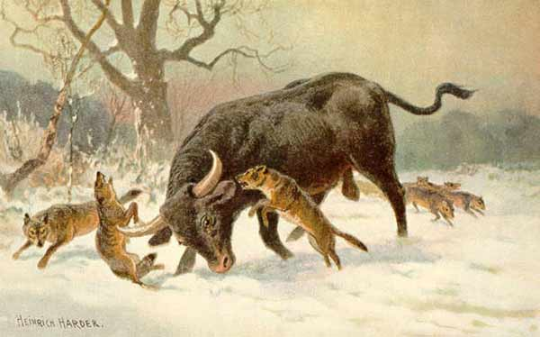نقاشی که درگیری یک گله گرگ را با یک گاومیش اروپایی را نشان میدهد. این نقاشی توسط هاینریش هاردر در اواخر قرن نوزدهم نقاشی شده است
