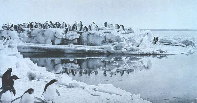 همجنسگرایی در پنگوئن ها ؛ چرا روابط پنگوئن ها به نظر شرمآور است!