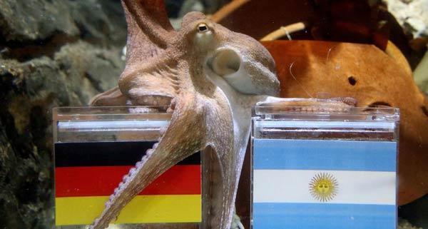 هشتپایی به نام، یکی از مشهورترین حیواناتی است که مسابقات فوتبال را پیشبینی کرده است