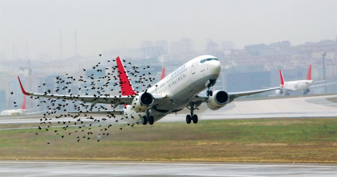 کاهش خطر برخورد پرندگان با هواپیما بوسیله پهپادهای خودران