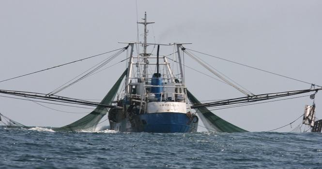 کشتیهای چینی در خلیج فارس ؛ 1200 گونه دریایی در معرض خطر