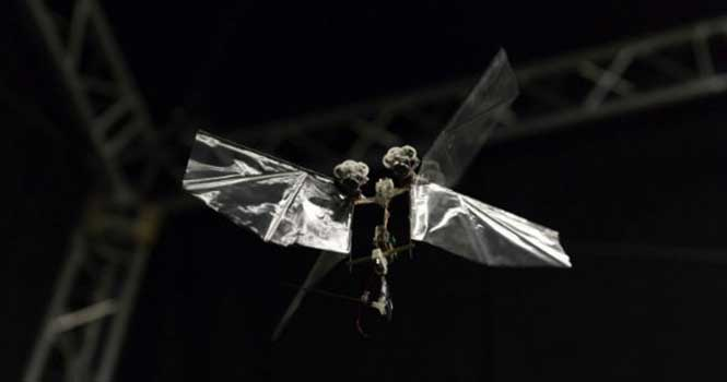 ساخت پهپاد شبیه به مگس با امکان تغییر مسیر ناگهانی در سرعت بالا