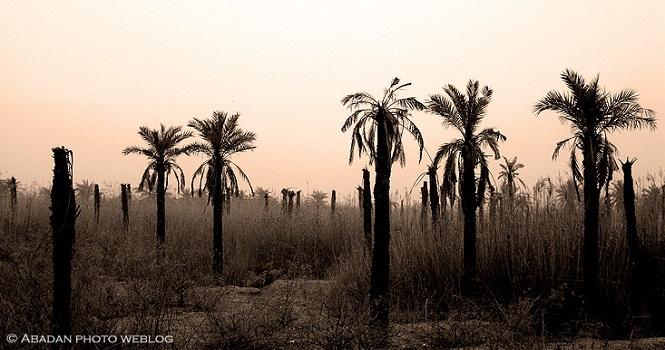 شوری آب در خوزستان ؛ زمین سفید، مردم سیاهپوش و نخلها مرده!