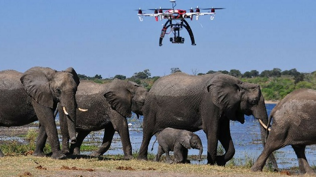 در حال حاضر عملکرد هواپیماهای بدون سرنشین برای پیگیری و نظارت بر سلامت حیوانات بسیار مهم است {hendevaneh.com}{سایتهندوانه} - 1 MkMDHogMY52BmU EZZ zdA - کاربردهای پهپاد در زندگی امروزی ؛ استفاده از پهپادها در صنایع مختلف