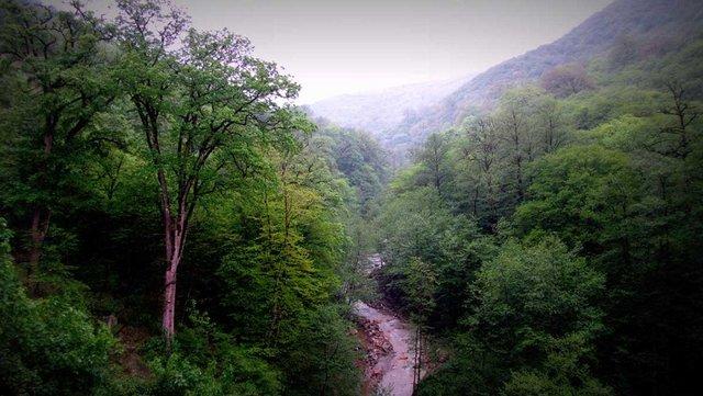نابودی جنگل های ایران تا ۳۰ سال آینده ؛ جنگلهای شمال به پایان عمرشان نزدیک میشوند!