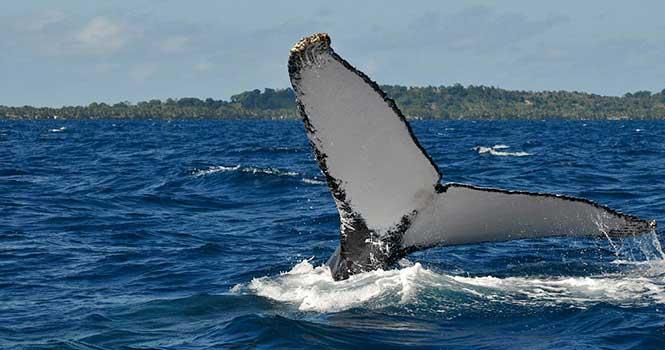استتار پیام های نظامی با استفاده از صدای نهنگ در چین
