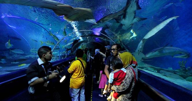 آکواریوم کوالالامپور آینه ای از زیر دریا
