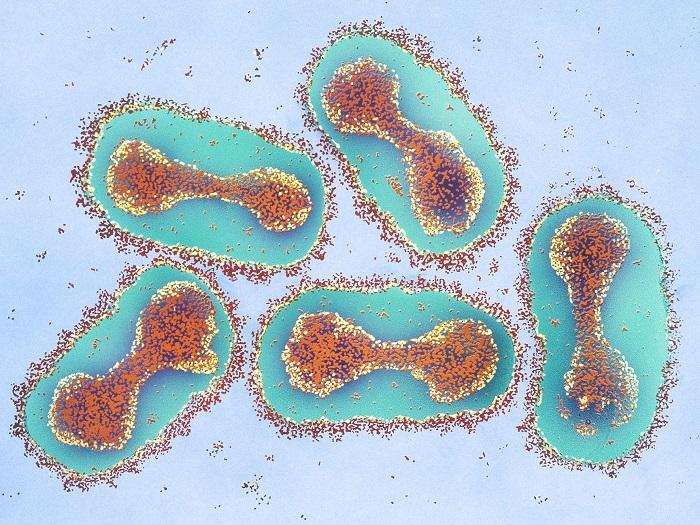 ویروس آبله